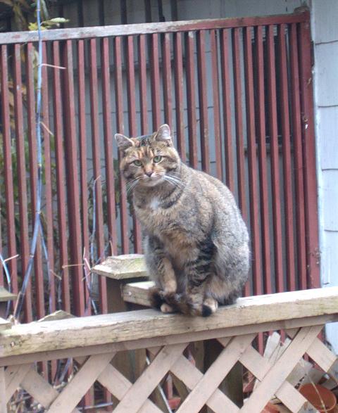 Cat-handrail